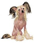 Chinese Crested Dog 3